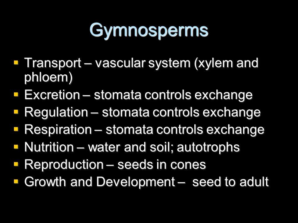 Gymnosperms Transport – vascular system (xylem and phloem) Transport – vascular system (xylem and phloem) Excretion – stomata controls exchange Excret