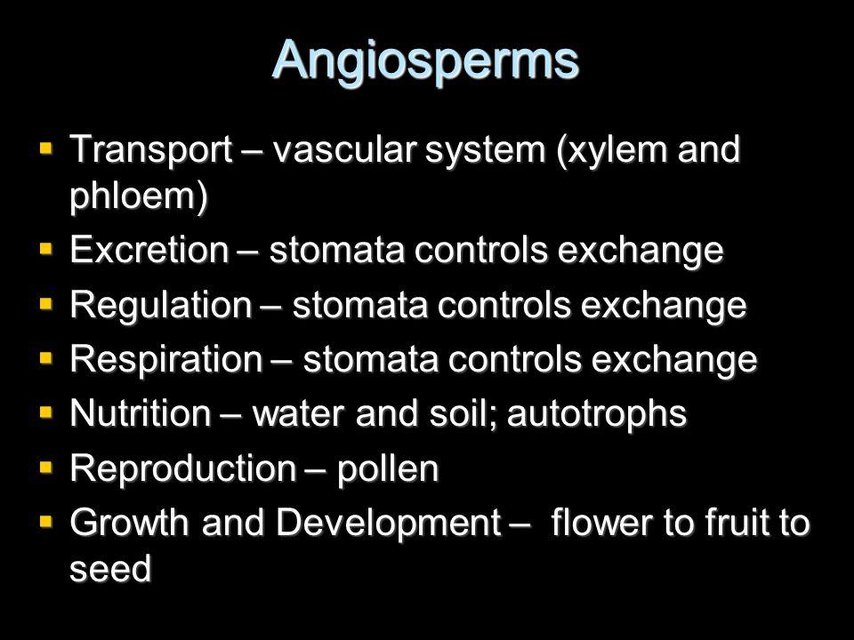 Angiosperms Transport – vascular system (xylem and phloem) Transport – vascular system (xylem and phloem) Excretion – stomata controls exchange Excret