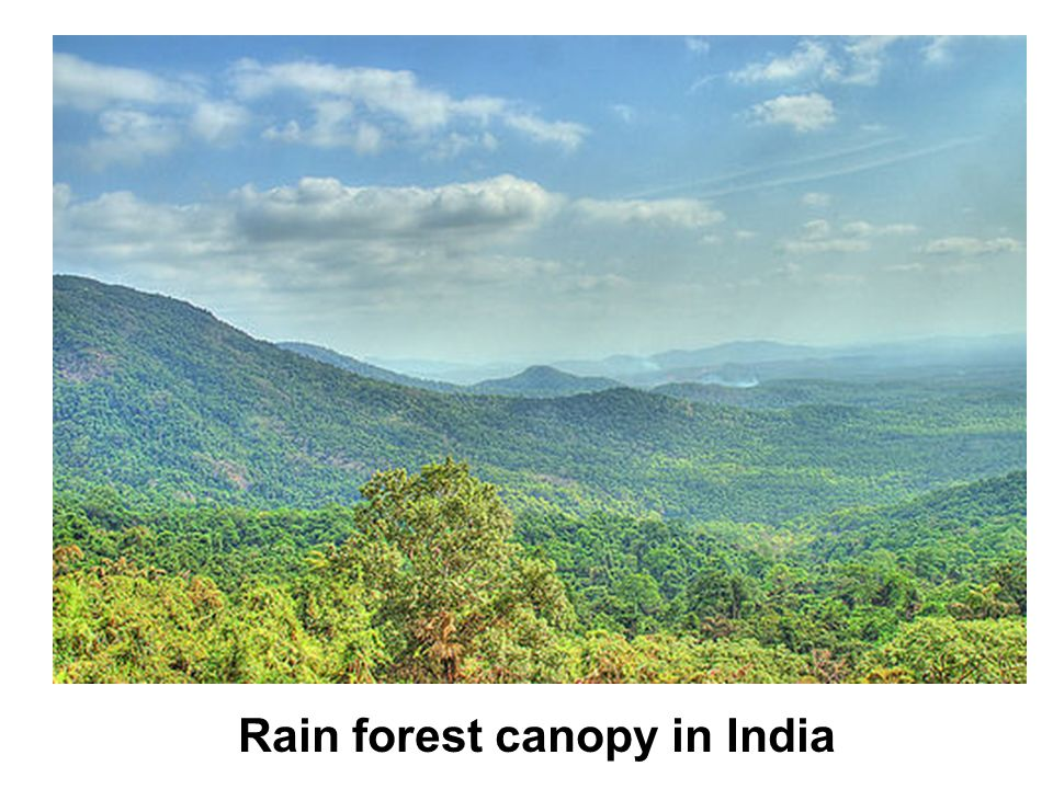 Views of a rain forest