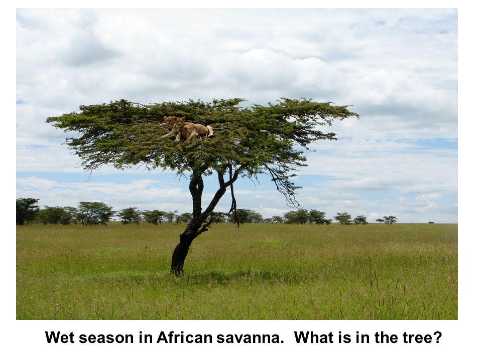 Dry season in the African savanna