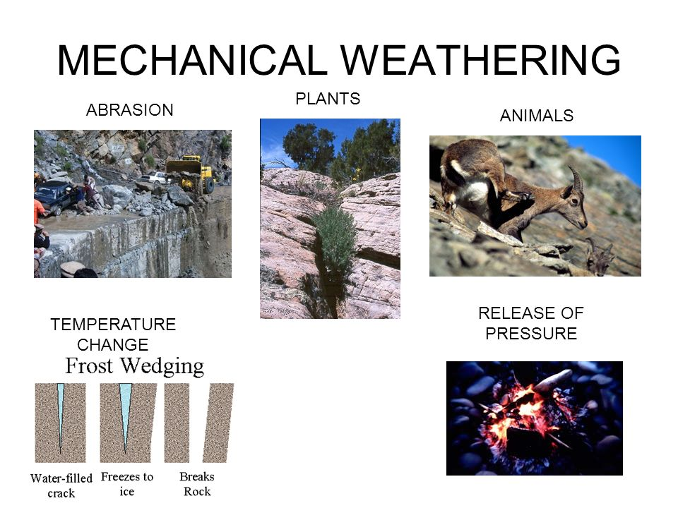 MECHANICAL WEATHERING ABRASION PLANTS ANIMALS TEMPERATURE CHANGE RELEASE OF PRESSURE