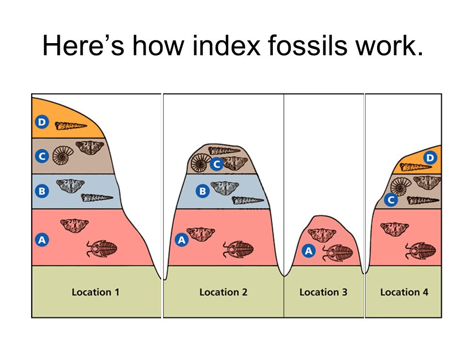 Heres how index fossils work.