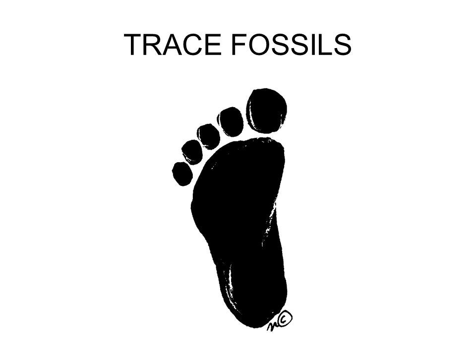 TRACE FOSSILS