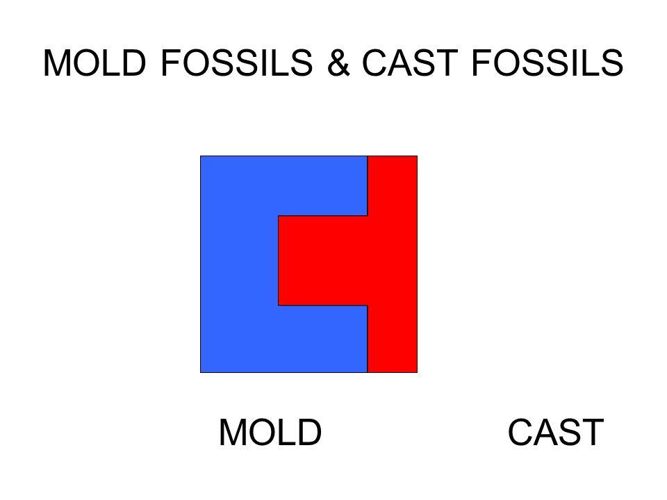 MOLD FOSSILS & CAST FOSSILS CASTMOLD