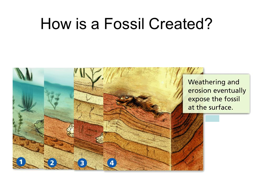 How is a Fossil Created?