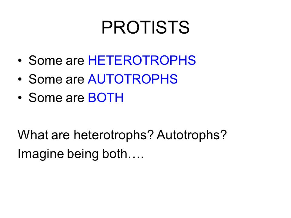 PROTISTS Some are HETEROTROPHS Some are AUTOTROPHS Some are BOTH What are heterotrophs? Autotrophs? Imagine being both….