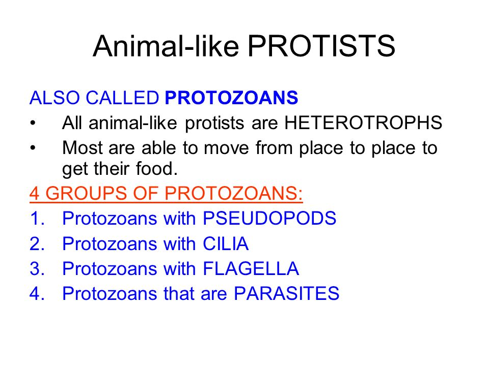 Animal-like PROTISTS ALSO CALLED PROTOZOANS All animal-like protists are HETEROTROPHS Most are able to move from place to place to get their food. 4 G