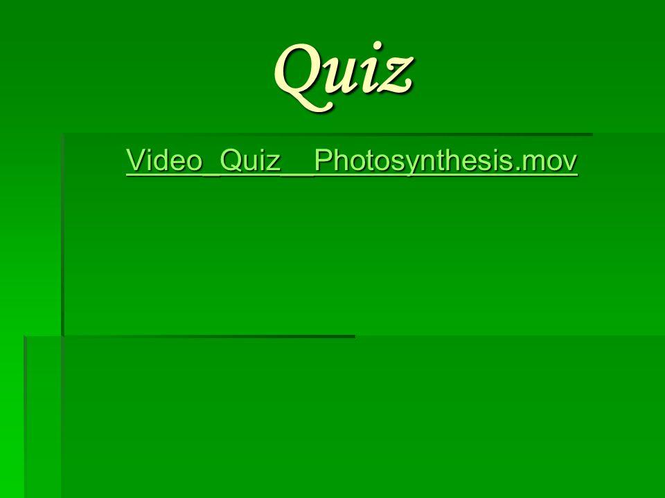 Quiz Video_Quiz__Photosynthesis.mov