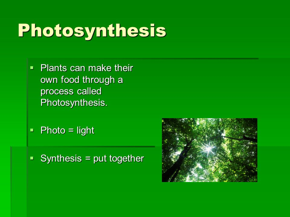 Photosynthesis Plants can make their own food through a process called Photosynthesis. Plants can make their own food through a process called Photosy