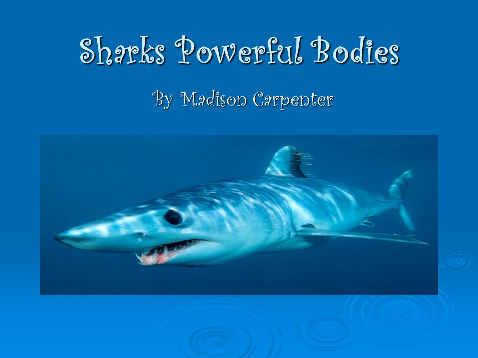 Sharks Powerful Bodies By Madison Carpenter