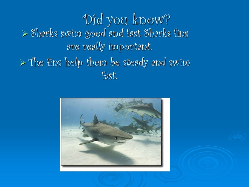 Did you know? Sharks swim good and fast Sharks fins are really important. Sharks swim good and fast Sharks fins are really important. The fins help th