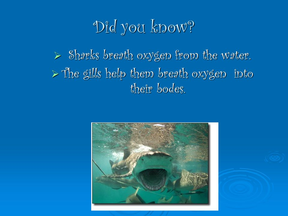 Did you know? Sharks breath oxygen from the water. Sharks breath oxygen from the water. The gills help them breath oxygen into their bodes. The gills