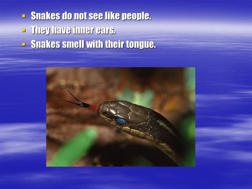 Snakes do not see like people. Snakes do not see like people.