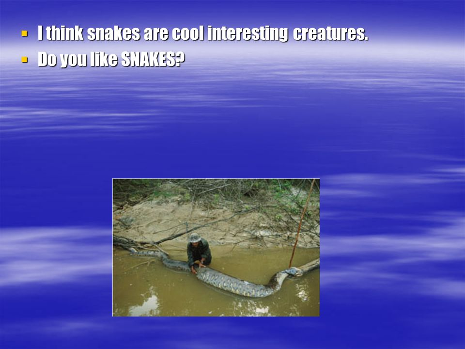 I think snakes are cool interesting creatures.I think snakes are cool interesting creatures.