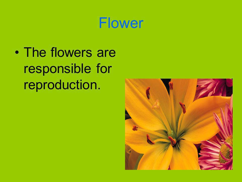 Flower The flowers are responsible for reproduction.