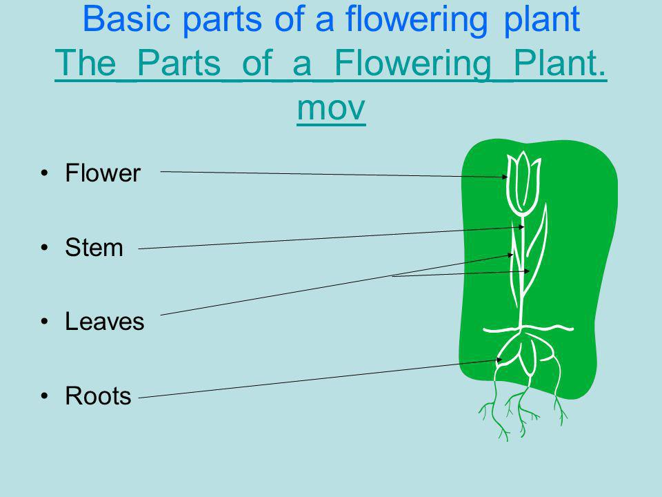 Basic parts of a flowering plant The_Parts_of_a_Flowering_Plant. mov The_Parts_of_a_Flowering_Plant. mov Flower Stem Leaves Roots