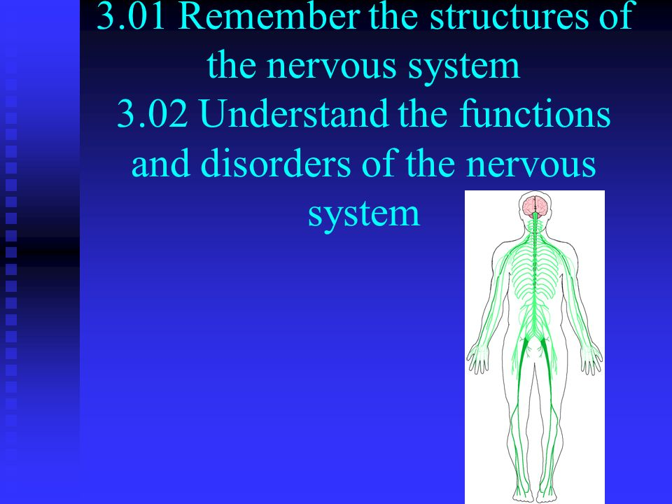 3.01 Remember the structures of the nervous system 3.02 Understand the functions and disorders of the nervous system