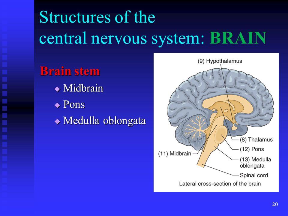 20 BRAIN Structures of the central nervous system: BRAIN Brain stem Midbrain Midbrain Pons Pons Medulla oblongata Medulla oblongata