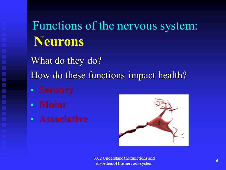 3.02 Understand the functions and disorders of the nervous system 6 Functions of the nervous system: Neurons What do they do? How do these functions i