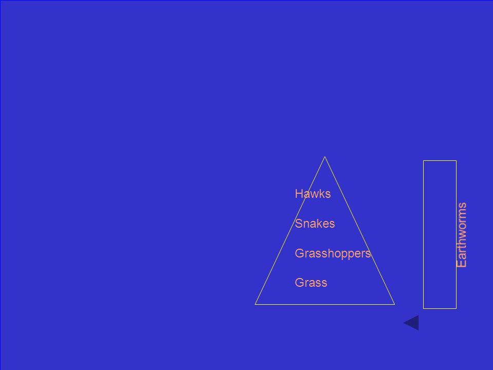 Fill in the blanks on the trophic pyramid with missing terms: Earthworms Grass Grasshoppers Snakes Hawks