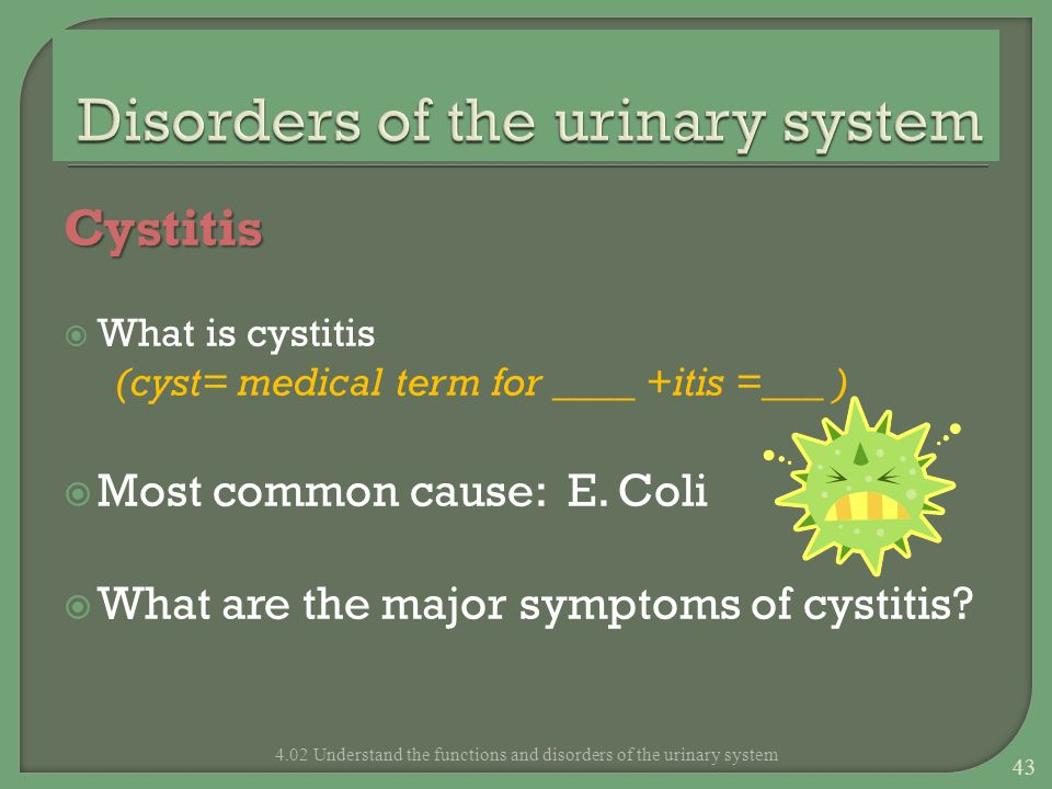 Cystitis What is cystitis (cyst= medical term for ____ +itis =___ ) Most common cause: E. Coli What are the major symptoms of cystitis? 4.02 Understan