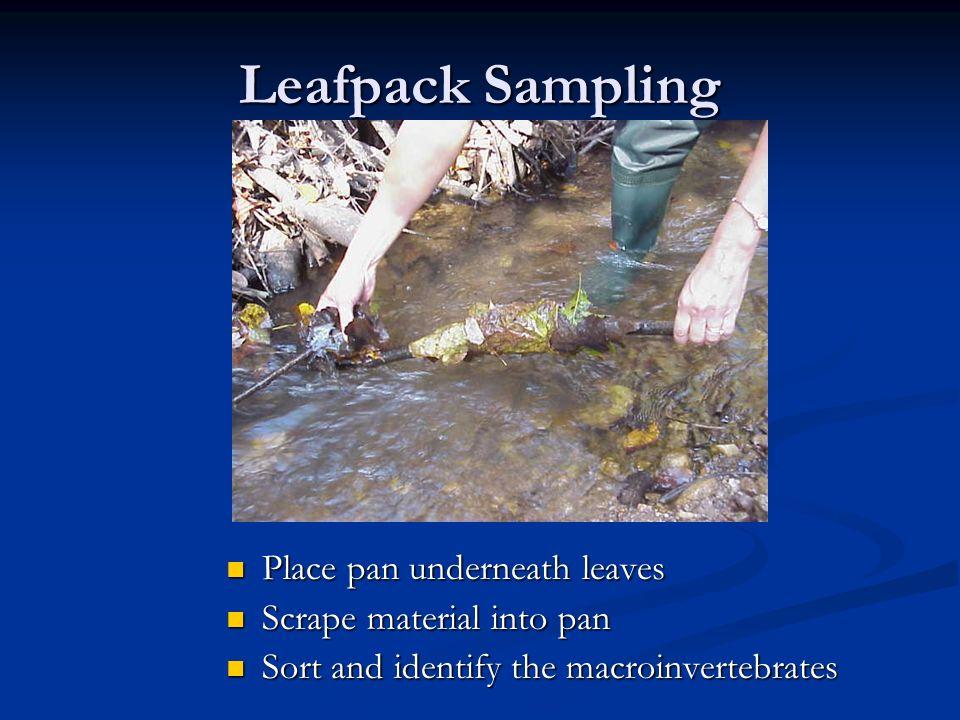 Leafpack Sampling Place pan underneath leaves Place pan underneath leaves Scrape material into pan Scrape material into pan Sort and identify the macroinvertebrates Sort and identify the macroinvertebrates