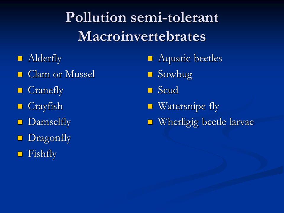 Pollution semi-tolerant Macroinvertebrates Alderfly Alderfly Clam or Mussel Clam or Mussel Cranefly Cranefly Crayfish Crayfish Damselfly Damselfly Dra