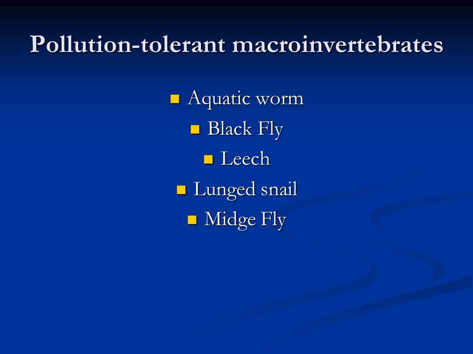 Pollution-tolerant macroinvertebrates Aquatic worm Aquatic worm Black Fly Black Fly Leech Leech Lunged snail Lunged snail Midge Fly Midge Fly