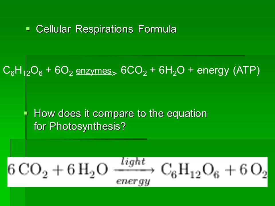 Cellular Respirations Formula Cellular Respirations Formula How does it compare to the equation for Photosynthesis? How does it compare to the equatio