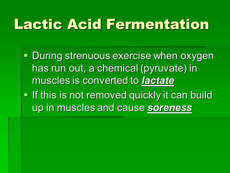 Lactic Acid Fermentation During strenuous exercise when oxygen has run out, a chemical (pyruvate) in muscles is converted to lactate During strenuous