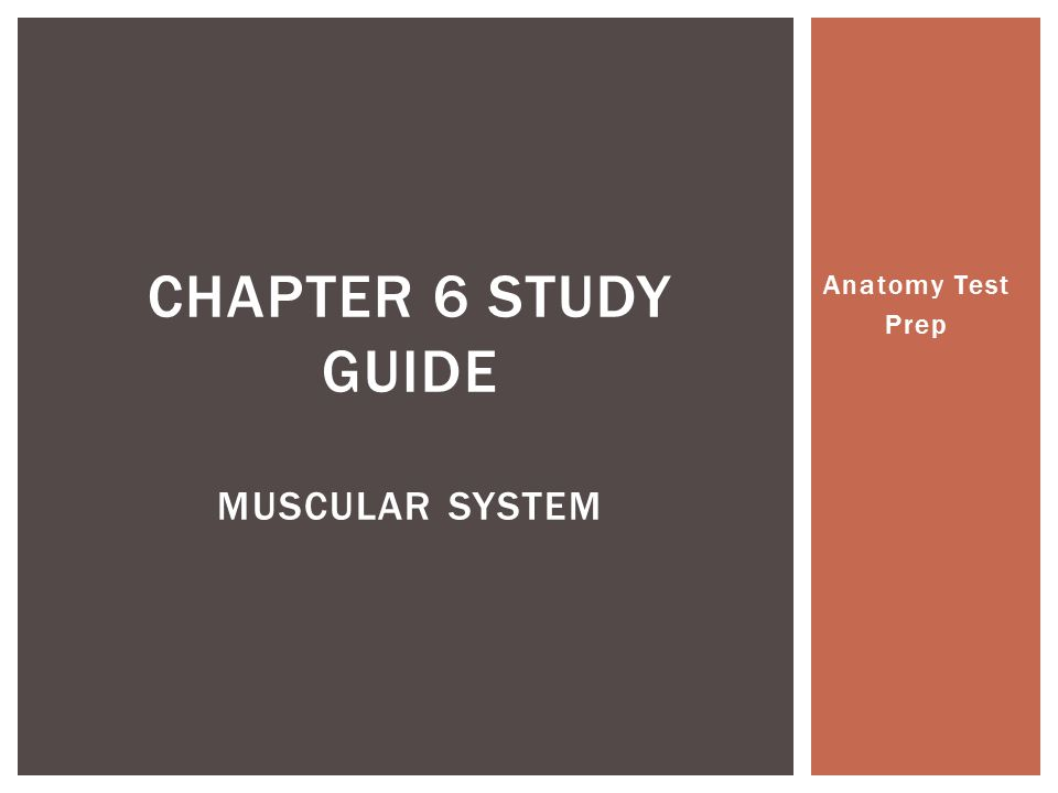 Anatomy Test Prep CHAPTER 6 STUDY GUIDE MUSCULAR SYSTEM