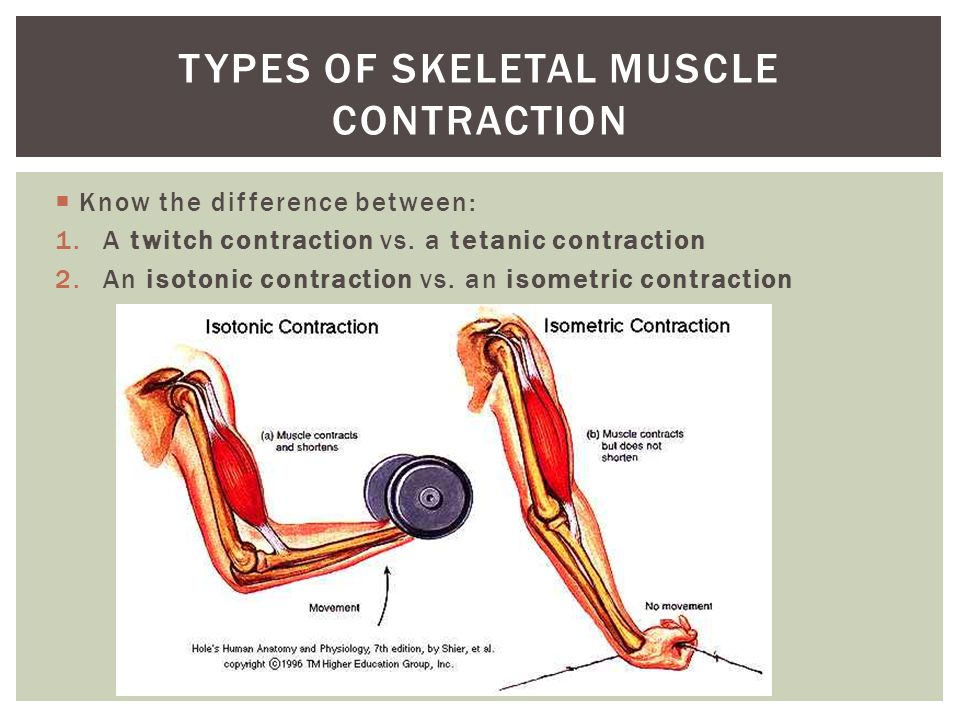 Know the difference between: 1.A twitch contraction vs. a tetanic contraction 2.An isotonic contraction vs. an isometric contraction TYPES OF SKELETAL