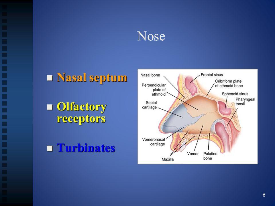 Nose Nasal septum Nasal septum Olfactory receptors Olfactory receptors Turbinates Turbinates 6