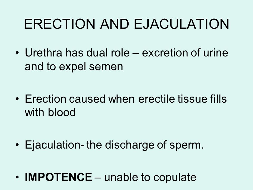 ERECTION AND EJACULATION Urethra has dual role – excretion of urine and to expel semen Erection caused when erectile tissue fills with blood Ejaculati