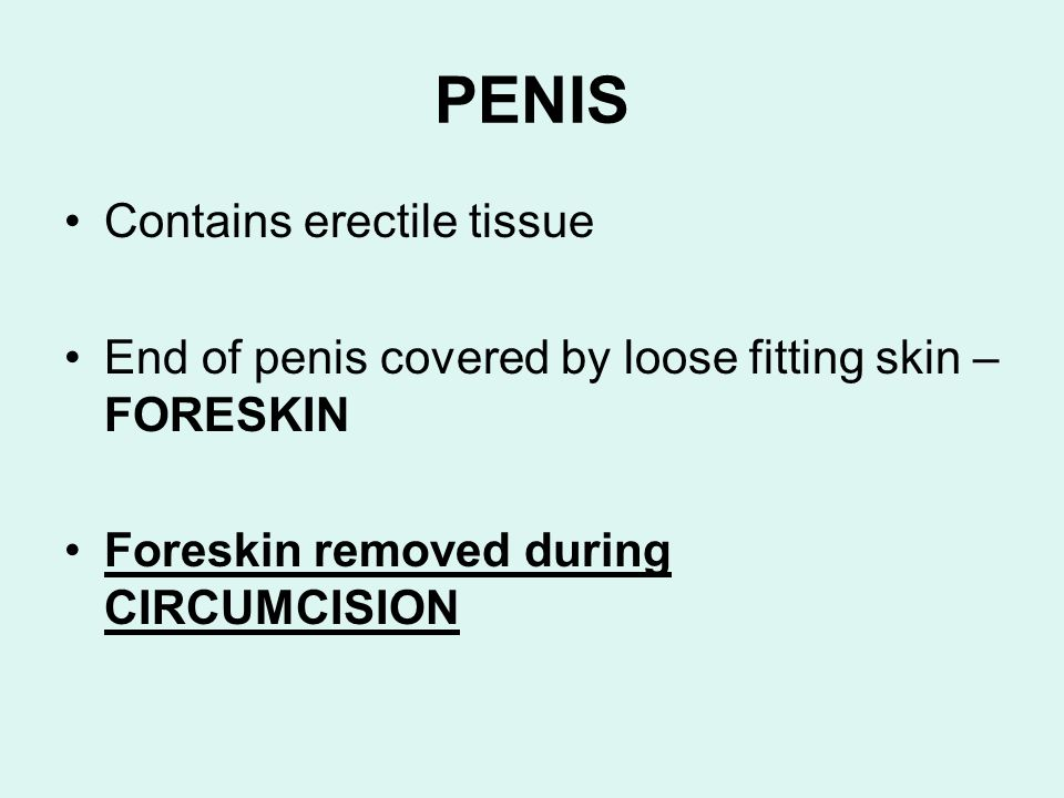 PENIS Contains erectile tissue End of penis covered by loose fitting skin – FORESKIN Foreskin removed during CIRCUMCISION