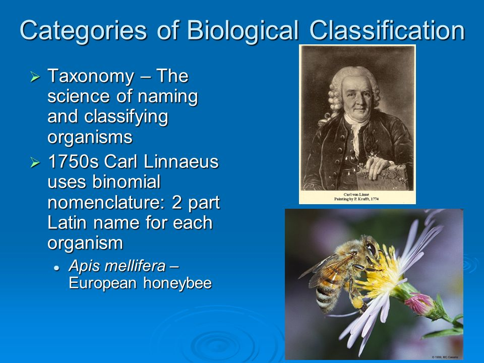 Categories of Biological Classification Taxonomy – The science of naming and classifying organisms Taxonomy – The science of naming and classifying organisms 1750s Carl Linnaeus uses binomial nomenclature: 2 part Latin name for each organism 1750s Carl Linnaeus uses binomial nomenclature: 2 part Latin name for each organism Apis mellifera – European honeybee Apis mellifera – European honeybee