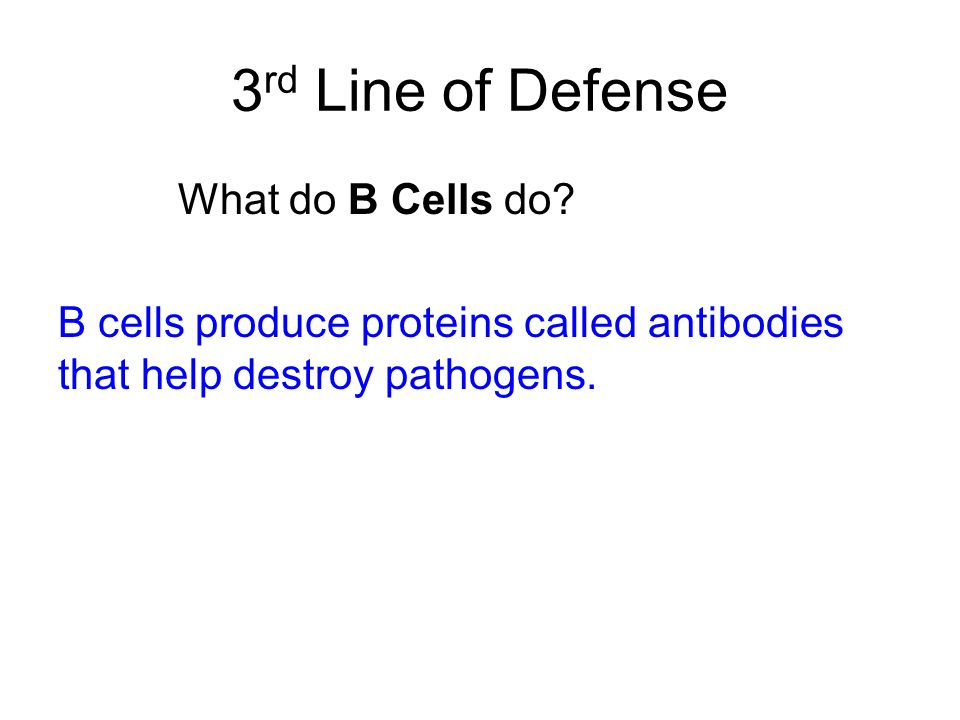 3 rd Line of Defense What do B Cells do? B cells produce proteins called antibodies that help destroy pathogens.