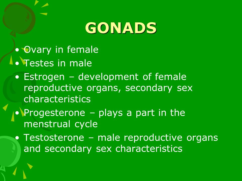 GONADS Ovary in female Testes in male Estrogen – development of female reproductive organs, secondary sex characteristics Progesterone – plays a part