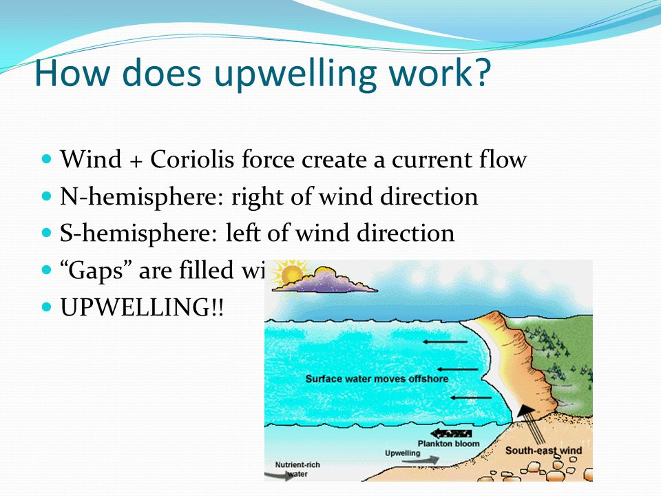How does upwelling work? Wind + Coriolis force create a current flow N-hemisphere: right of wind direction S-hemisphere: left of wind direction Gaps a