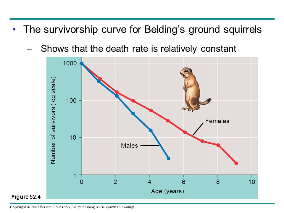 Copyright © 2005 Pearson Education, Inc. publishing as Benjamin Cummings The survivorship curve for Beldings ground squirrels – Shows that the death r