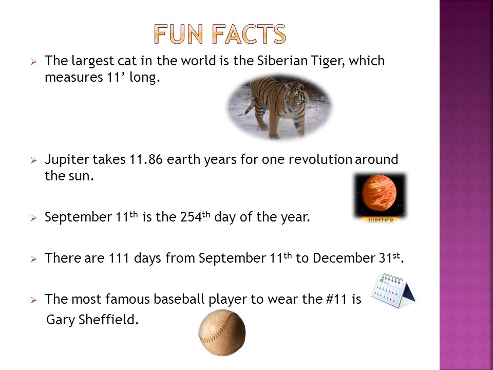 The largest cat in the world is the Siberian Tiger, which measures 11 long.