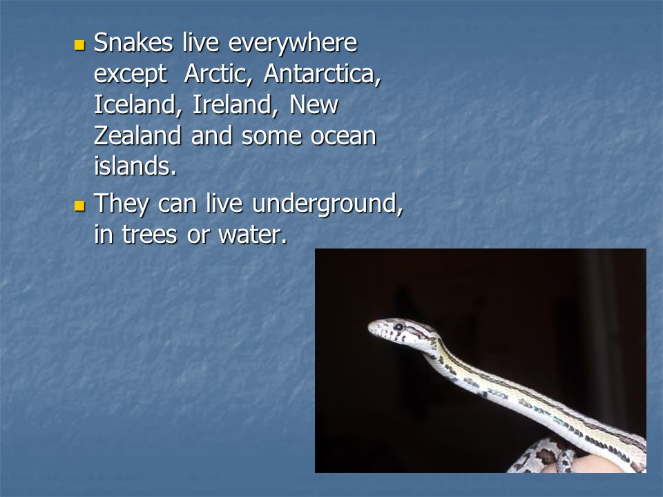 Snakes live everywhere except Arctic, Antarctica, Iceland, Ireland, New Zealand and some ocean islands.