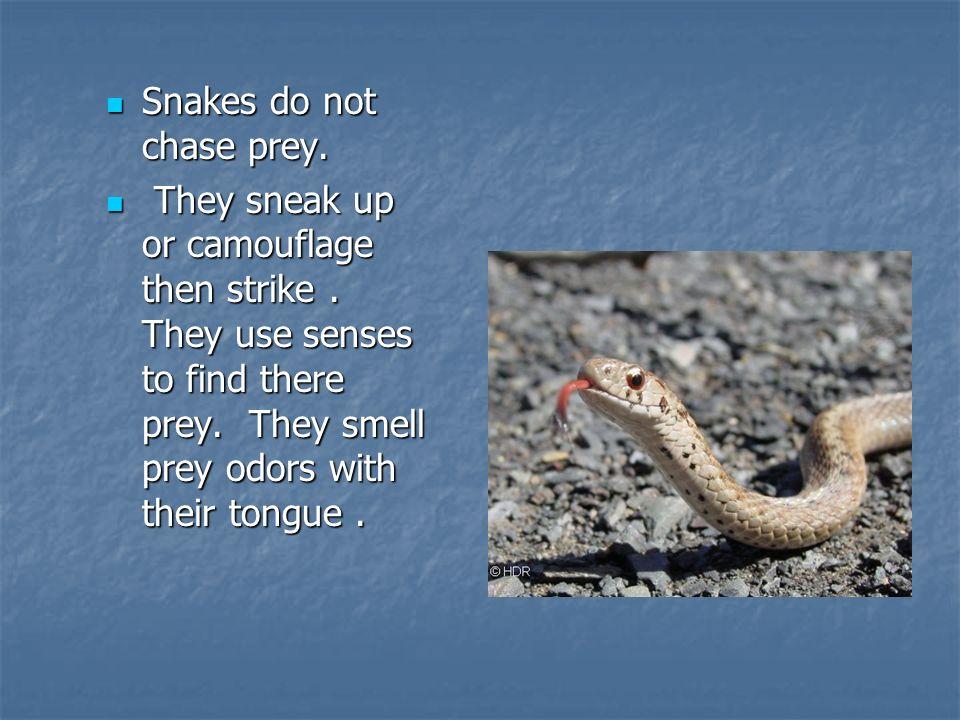 Snakes do not chase prey. Snakes do not chase prey.