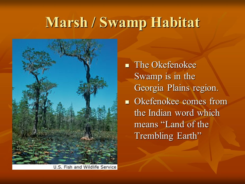 Marsh / Swamp Habitat The Okefenokee Swamp is in the Georgia Plains region. The Okefenokee Swamp is in the Georgia Plains region. Okefenokee comes fro