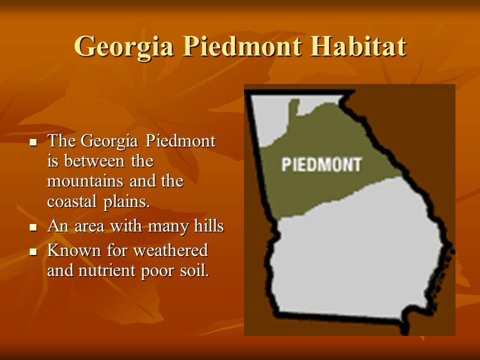 Georgia Piedmont Habitat The Georgia Piedmont is between the mountains and the coastal plains. The Georgia Piedmont is between the mountains and the c