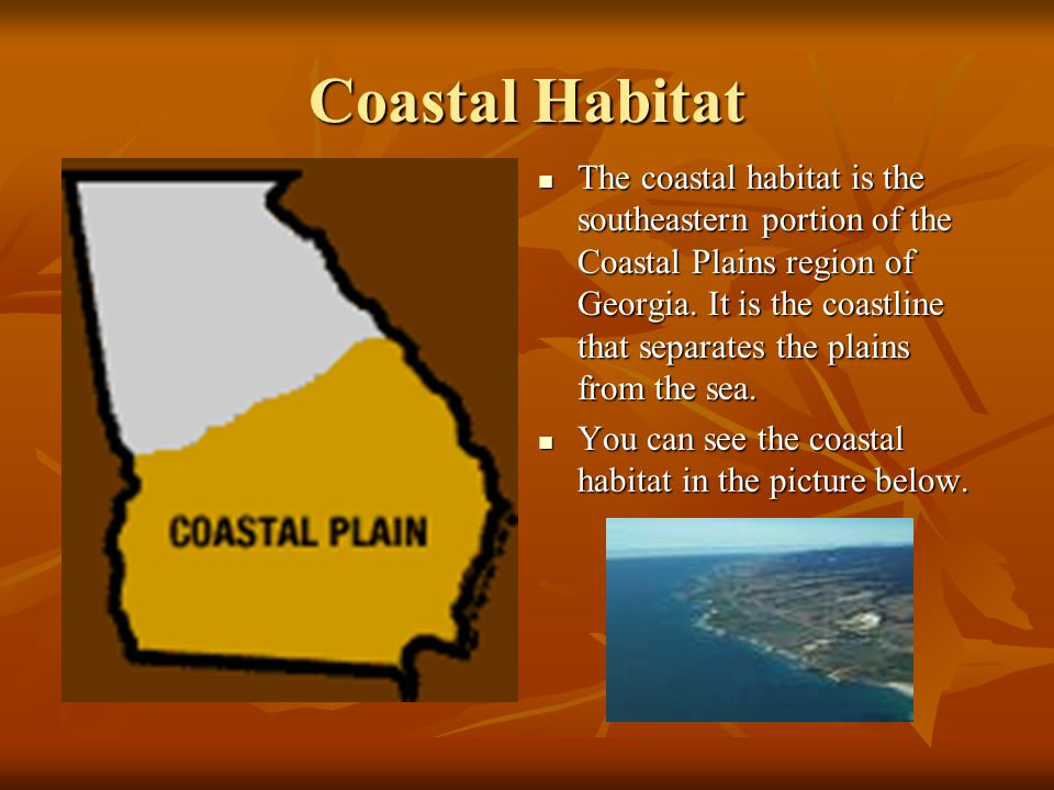 Coastal Habitat The coastal habitat is the southeastern portion of the Coastal Plains region of Georgia. It is the coastline that separates the plains