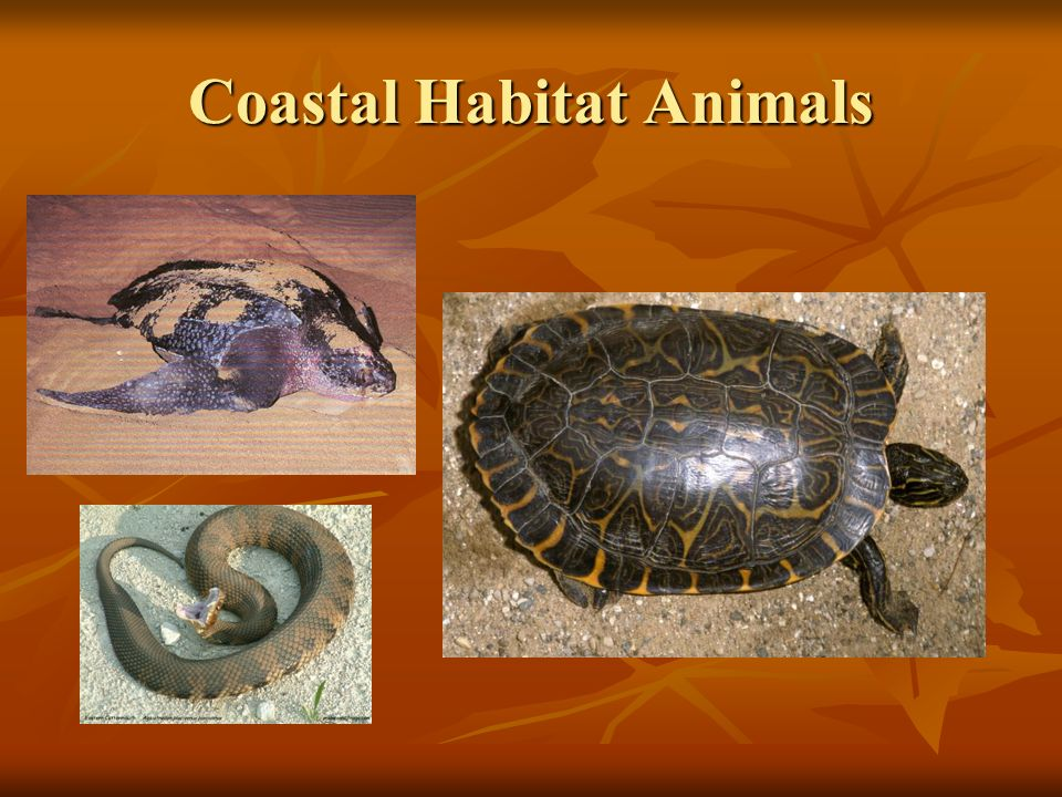 Coastal Habitat Animals
