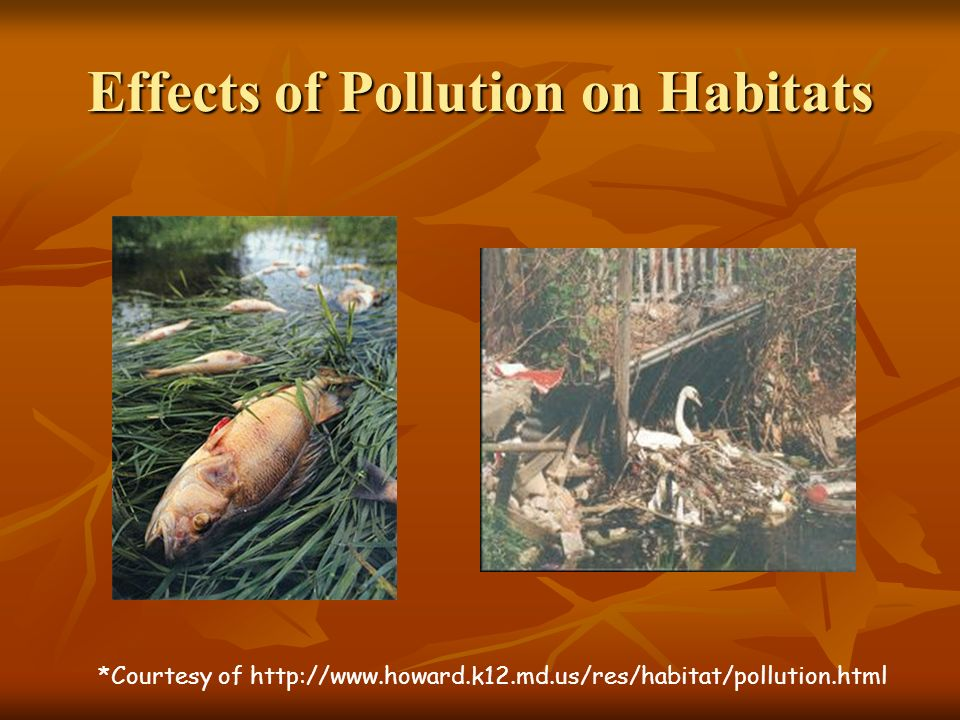 Effects of Pollution on Habitats *Courtesy of http://www.howard.k12.md.us/res/habitat/pollution.html