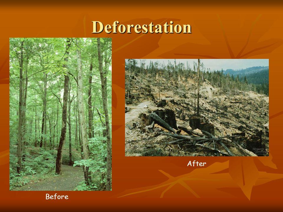 Deforestation Before After