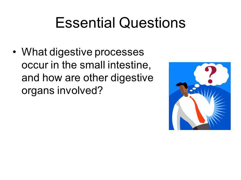Essential Questions The role of the liver is to produce bile. Bile is a substance that breaks up fat particles. Bile flows from the liver into the gal